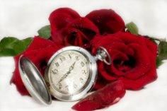 Какими преданиями овеяна история… розы?