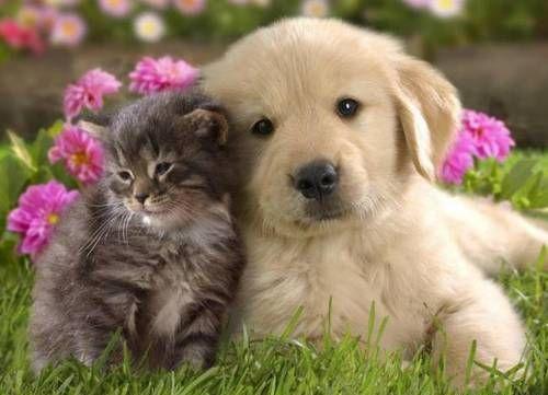 Собаки полезнее кошек?