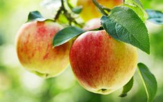Что приготовить из яблок? Любимые рецепты