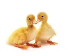 Какой праздник, кроме шуток, отмечают 1-го апреля? Всемирный день птиц!