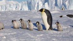 Где находится самое холодное место нашей планеты?