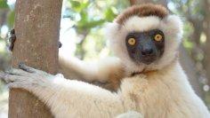 Где находится Седьмой континент? 10 причин поехать на Мадагаскар... или не делать этого. Часть 1