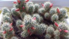 Как ухаживать за комнатными растениями? Календарь цветовода, январь-февраль