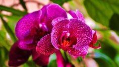 Цветы - украшение Земли. Можно ли сберечь их?
