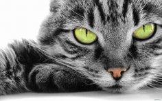 Почему нам так нравятся кошки?