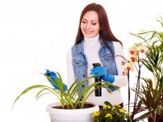 Решили разводить дома цветы? Делайте это правильно!
