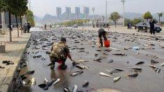 Странные дожди: как наловить рыбы... с неба?