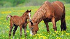 Кто придумал «лошадиную силу»?