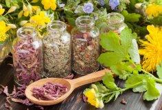Растения-обереги: травы в колдовстве