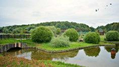 Гармония Терлецкого парка. Где отдохнуть в Москве?