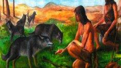 Как дикая собака стала домашней, а человечество обрело друзей?