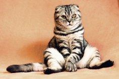 Как кошки чувствуют негативную энергию в доме?