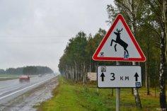 Как избежать столкновения с диким животным на трассе?