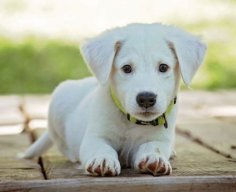 Как обучить собаку выполнять основные команды?