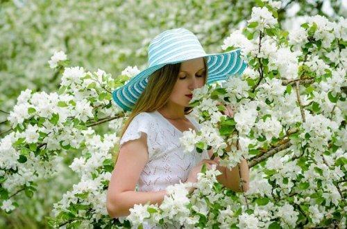 Обрезка плодовых деревьев: какие правила следует соблюдать?