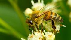 Пчелы - польза, осы - вред. Очередное заблуждение?