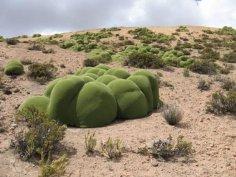 Какое растение могло попасть на Землю из космоса?