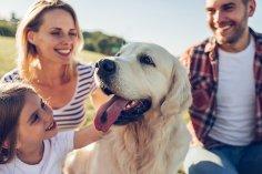 Собака - друг семьи