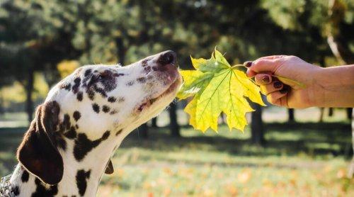Легко ли воспитать собаку?