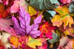 О чем говорят октябрьские приметы? Тайные знаки листопада