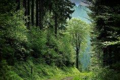 Десять фактов о лесах