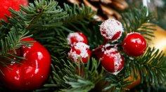 Почему ель - это новогоднее дерево?