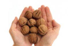Как расколоть орех? Щелкунчики на страже нашего здоровья