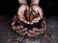 Эффект бабочки  в нашей жизни