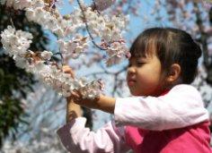 Что празднуют в мае жители Японии?