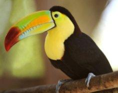 А не сходить ли нам в зоопарк? Удивительные открытия в мире животных