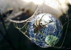 Коварный яд Всемирной паутины