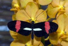 Легко ли превратиться в бабочку?