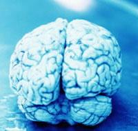 Размер мозга влияет на секс