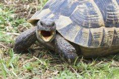 Черепаха: питомец и друг, или Кто там спит под батареей?